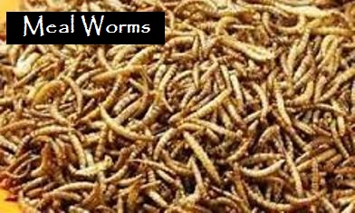 mworms