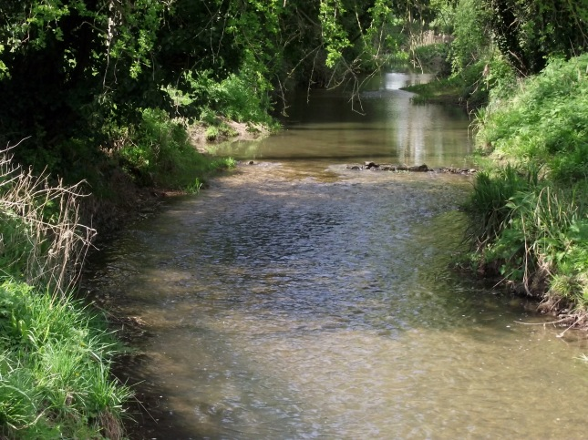 dunmow-river-chelmer