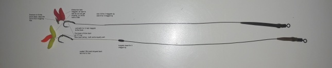maggot-1